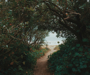 nature, beach, and forest image