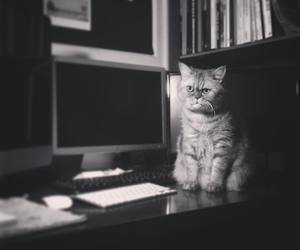 black and white, cat, and computer image