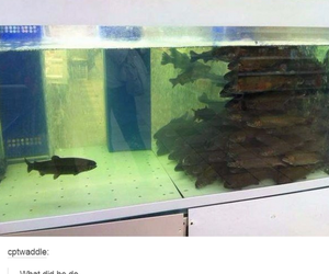 funny, lol, and fish image