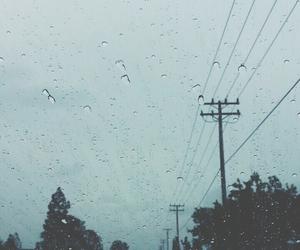 rain, nature, and indie image