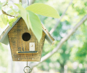 bird house, green, and leaf image
