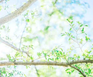 green, tree, and nature image