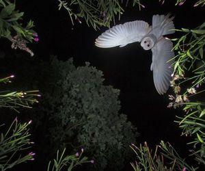 owl and night image