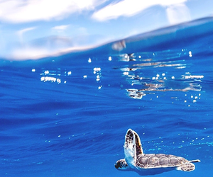 turtle, blue, and sea image