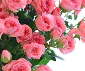 bouquet, boutique, and chic image