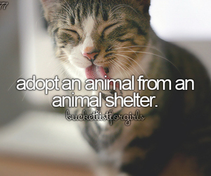 animal, pet, and animal shelter image