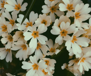 flowers, floral, and white image