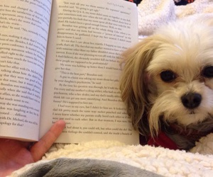 book and puppy image
