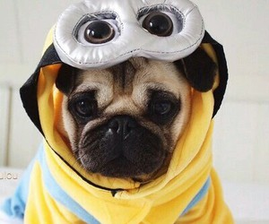 dog, cute, and minions image