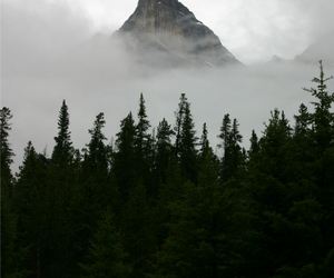 alternative, fog, and indie image