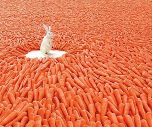carrot, rabbit, and bunny image