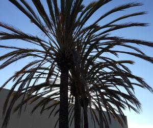california, palm trees, and san mateo image