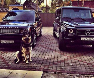 car, dog, and range rover image