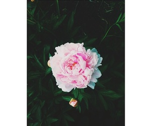flower, pink, and tumblr image
