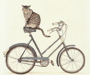cat and bike image