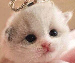 cat, cute, and princess image