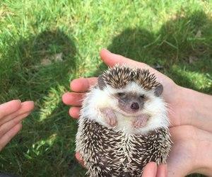 amazing, hand, and animal image