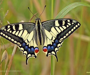 beautiful, butterfly, and wild image