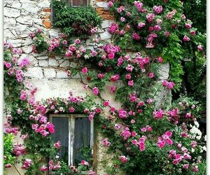 flowers, rose, and house image
