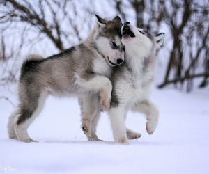 adorable, puppies, and puppy image