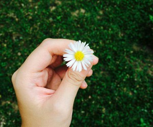 daisies, explore, and flowers image