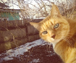 cats, Houses, and nature image
