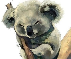 drawing, painting, and Koala image