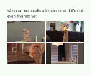 funny, cat, and lmfao image
