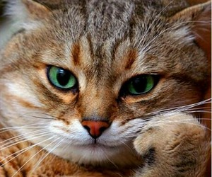 animals, cats, and crazy image