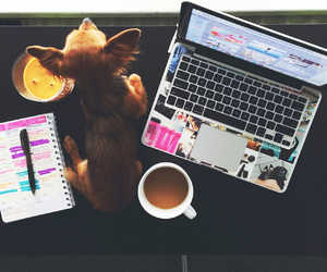 dog, coffee, and laptop image