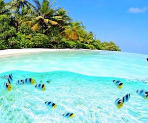 fish, summer, and beach image