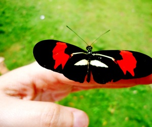 borboleta, butterfly, and verde image