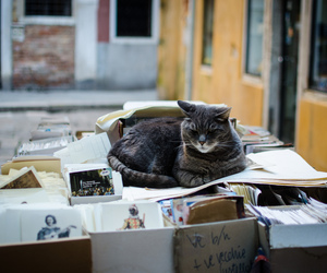 cat, book, and street image
