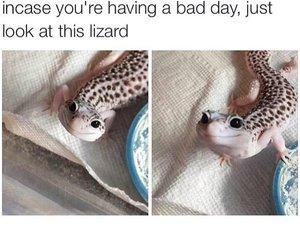 cute, lizard, and animal image