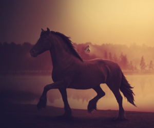 black, black horse, and butterfly image