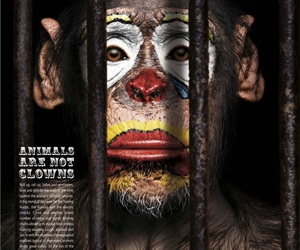 circus, monkey, and clown image