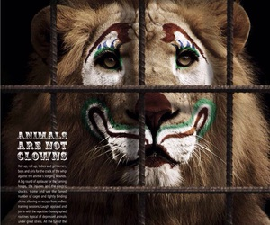 circus, lion, and clown image