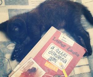 book, books, and cat image