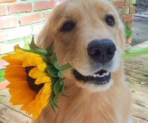 beautiful, dogs, and flowers image