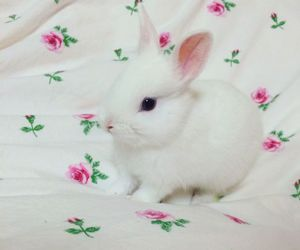 animals, bunny, and pink image