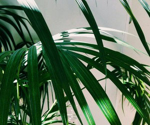 artsy, green, and photography image