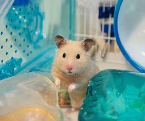 hamster, animal, and photography image