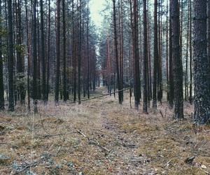 forest, grunge, and holidays image