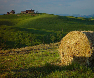 agriculture, farm, and green image