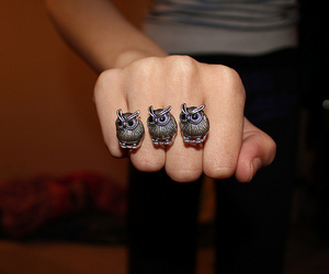 owl, photography, and ring image