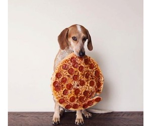 dog, pizza, and food image