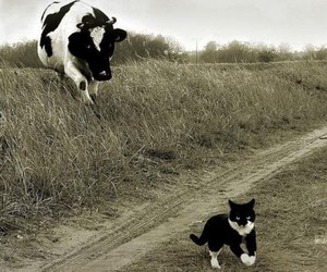 cat, cow, and animal image