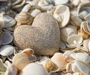 heart and shells image
