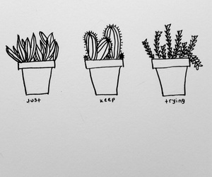 are, cactus, and draw image