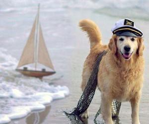 dog, sea, and animal image